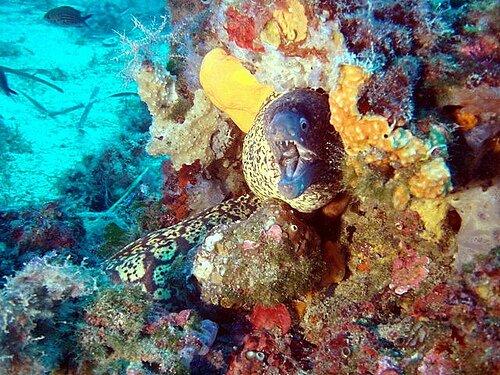 Nurkowanie w Europie: pod wodą w Cap Ferrat