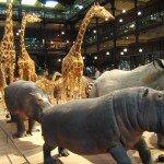 Darmowe muzea w Londynie-czyli jak spędzić fajnie wyjazd nie wydając ani grosza!