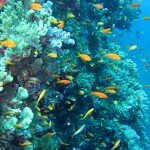Podwodny świat Egiptu – Morze Czerwone