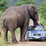 Foto Blog: Mój wyjazd na afrykańskie Safari!