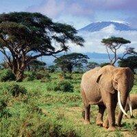 KENIA – zaplanuj wyjazd do serca Afryki od A do Z