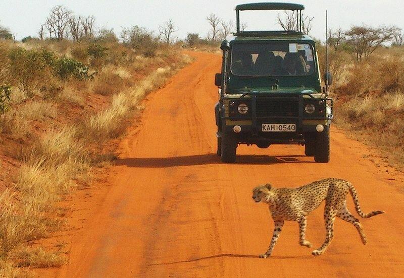 safari tsavo